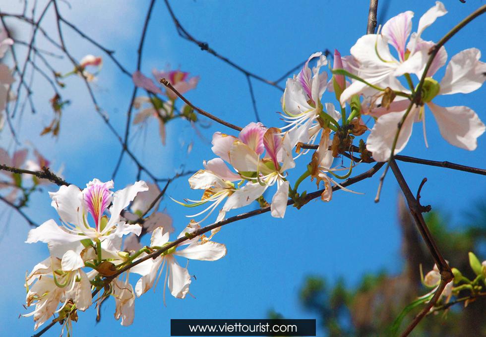 Ngập trời xanh màu hoa mây trắng tháng 3