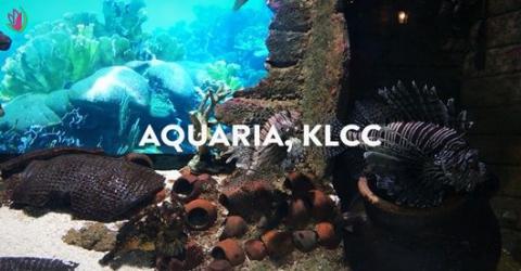 AQUARIA KLCC- THẾ GIỚI ĐẠI DƯƠNG TẠI KUALA LUMPUR