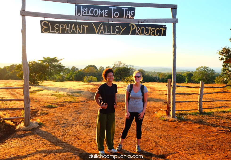 elephant-valley-project