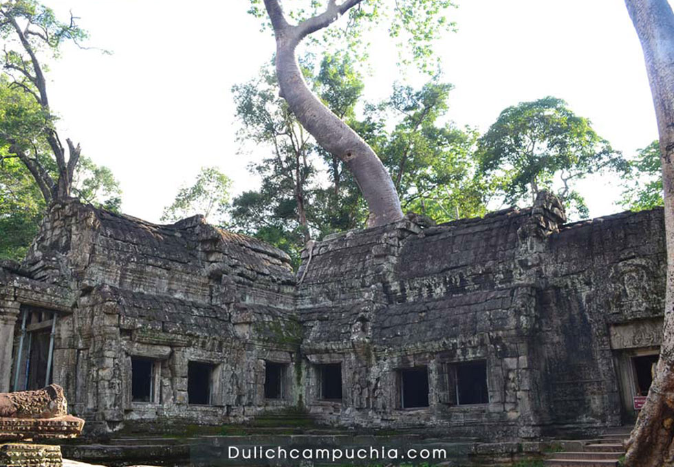 ta-promh-temple-on-tree-du-lich-campuchia