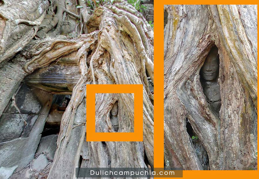 ta-promh-temple-on-tree-du-lich-campuchia