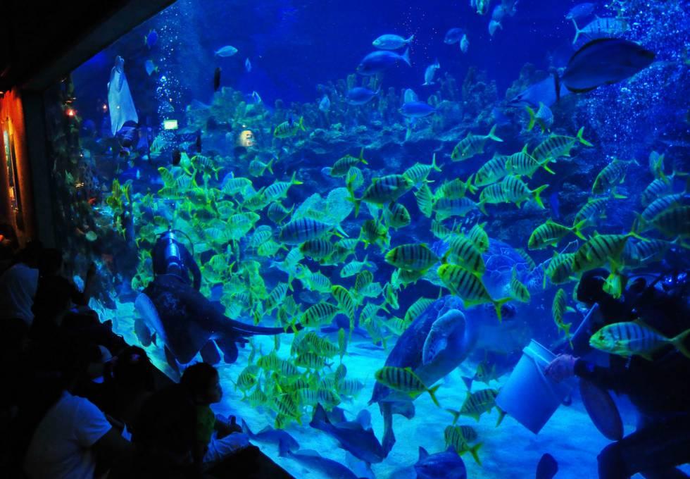 thuy-cung-aquaria-kuala-lumpur-city-center-viettourist