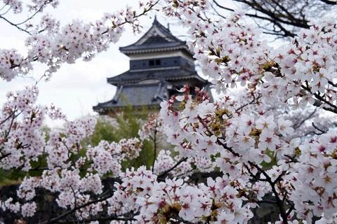 Du lịch Nhật Bản – Xuân Hạ Thu Đông