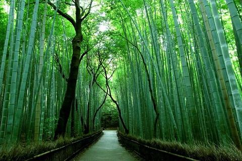 Lạc vào rừng tre Sagano đầy mê hoặc ở Arashiyama, Kyoto