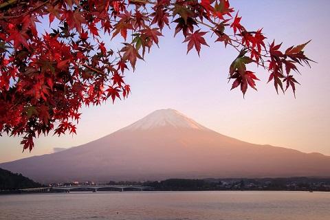 Top 8 địa điểm ngắm mùa thu lá đỏ đẹp nhất Nhật Bản