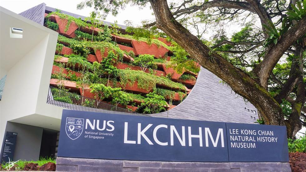 Lee-Kong-Chian-Natural-History-Museum1