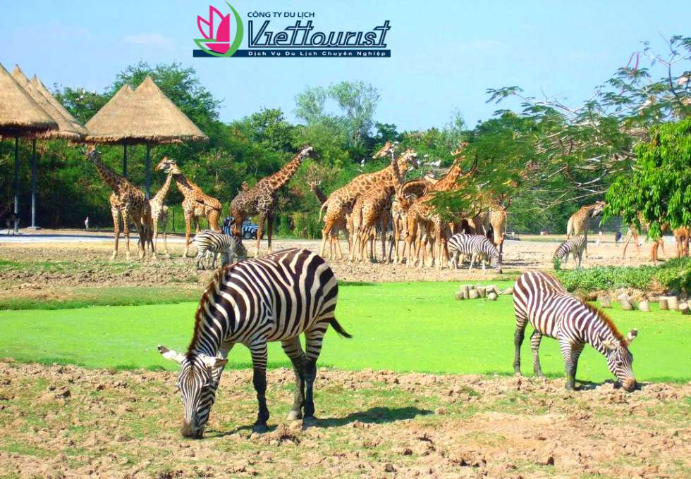 safari-world-thailand-viettourist