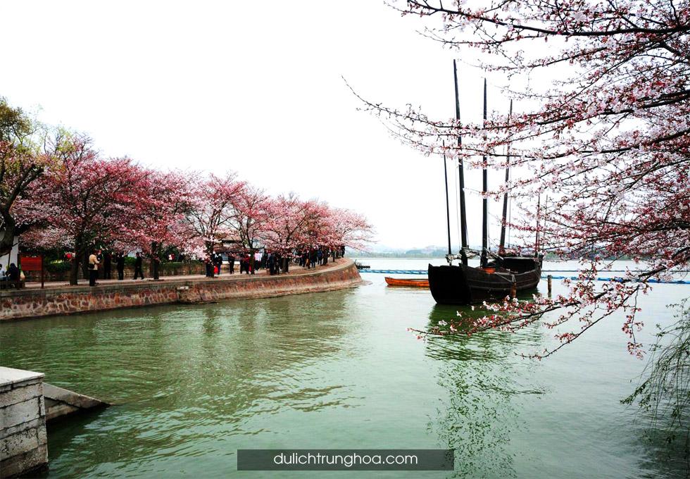 du lịch thượng hải hàng châu mùa hoa anh đào
