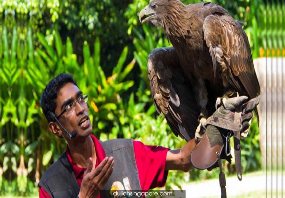 All-Star-Birdshow-du-lich-singapore-viettourist