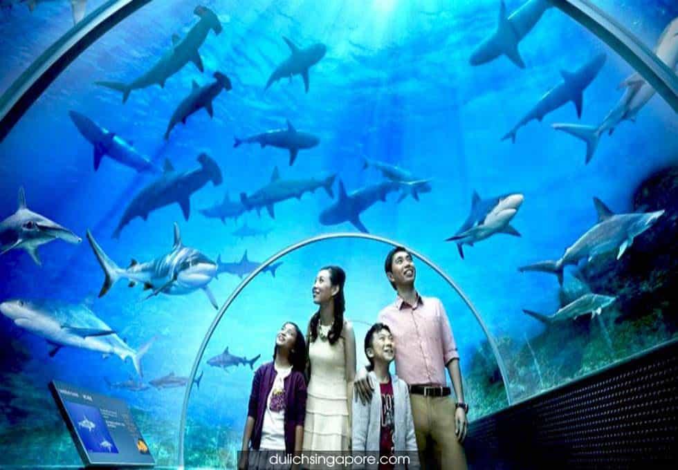 /thuy-cung-SEA-Aquarium-du-lich-singapore-3-ngay-2-dem