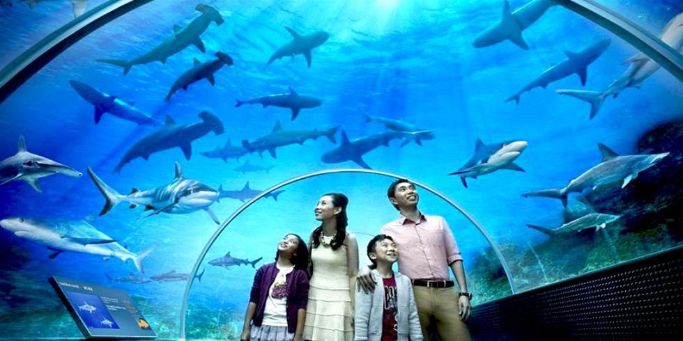 thuy-cung-SEA-Aquarium-du-lich-singapore-3-ngay-2-dem