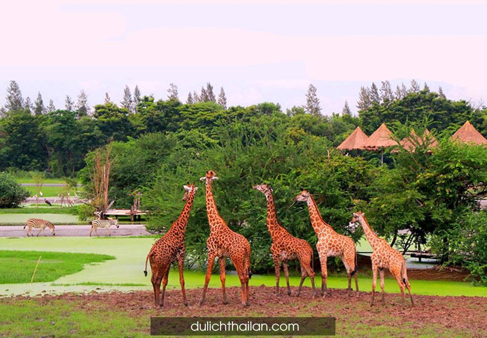 Safari-World2