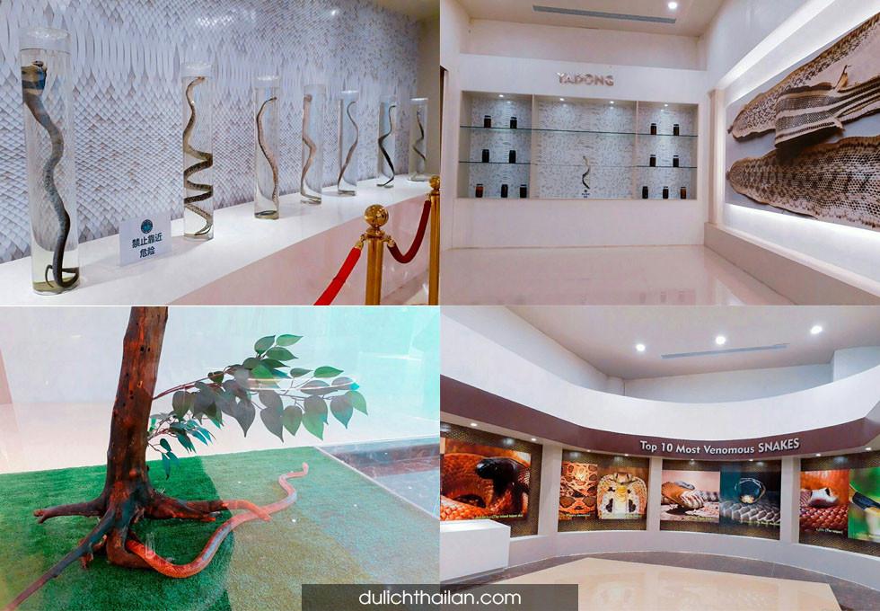 Viện nghiên cứu nọc rắn Hoàng Gia Thái Lan