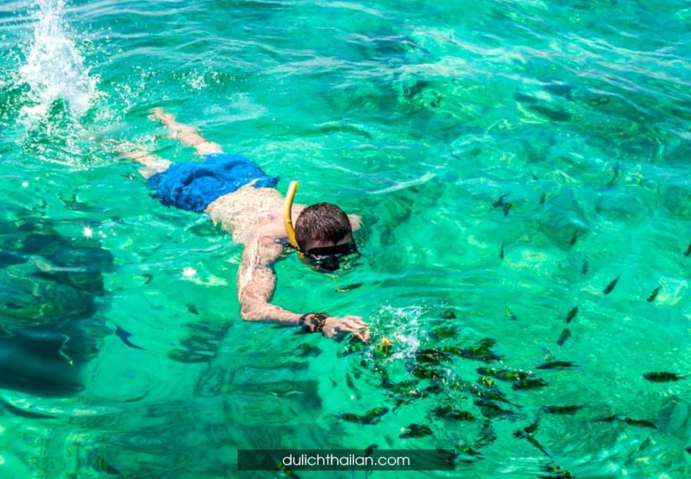 ngắm san hô