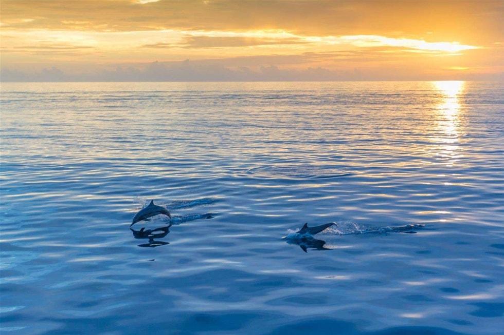 ca-heo-o-maldives