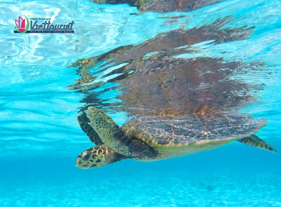 paradise-resort-maldives-viettourist