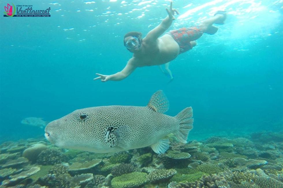 dulichmaldives-viettourist