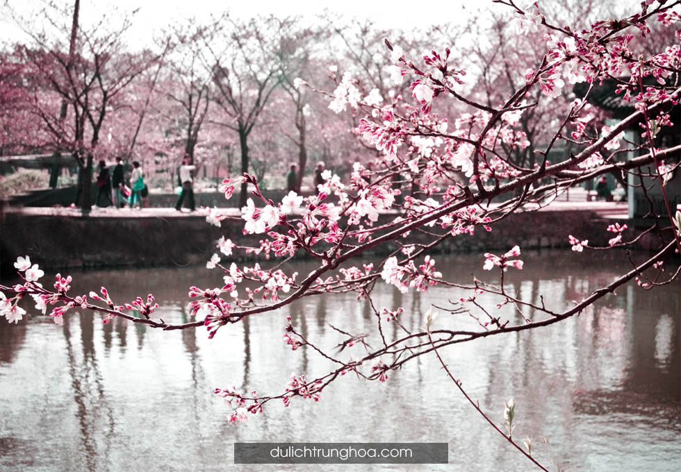 du lịch Bắc Kinh Vạn Lý trường thành mùa hoa anh đào