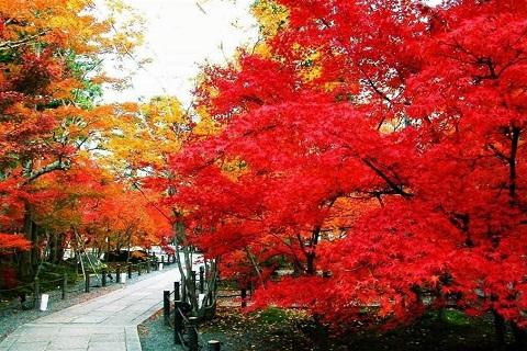 Ngắm thu lá đỏ mãn nhãn tại Công viên Hương Sơn Bắc Kinh