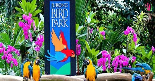 JURONG BIRD PARK - NGÔI NHÀ CỦA CÁC LOÀI CHIM