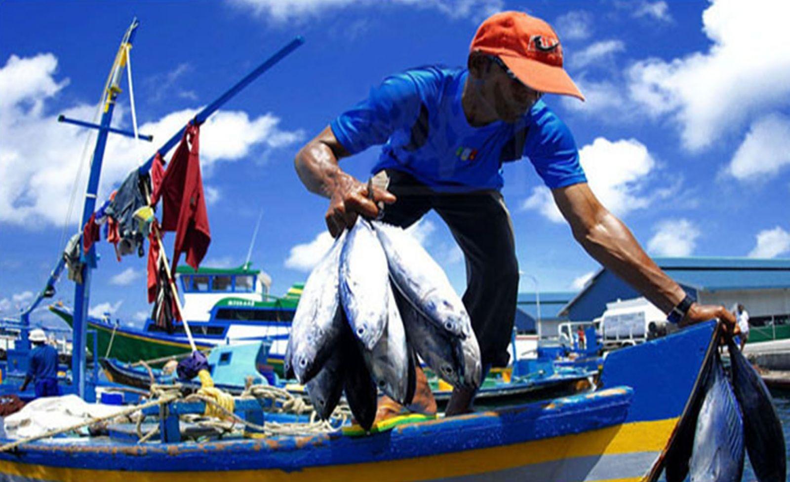 Chợ hải sản - Fish market Malé