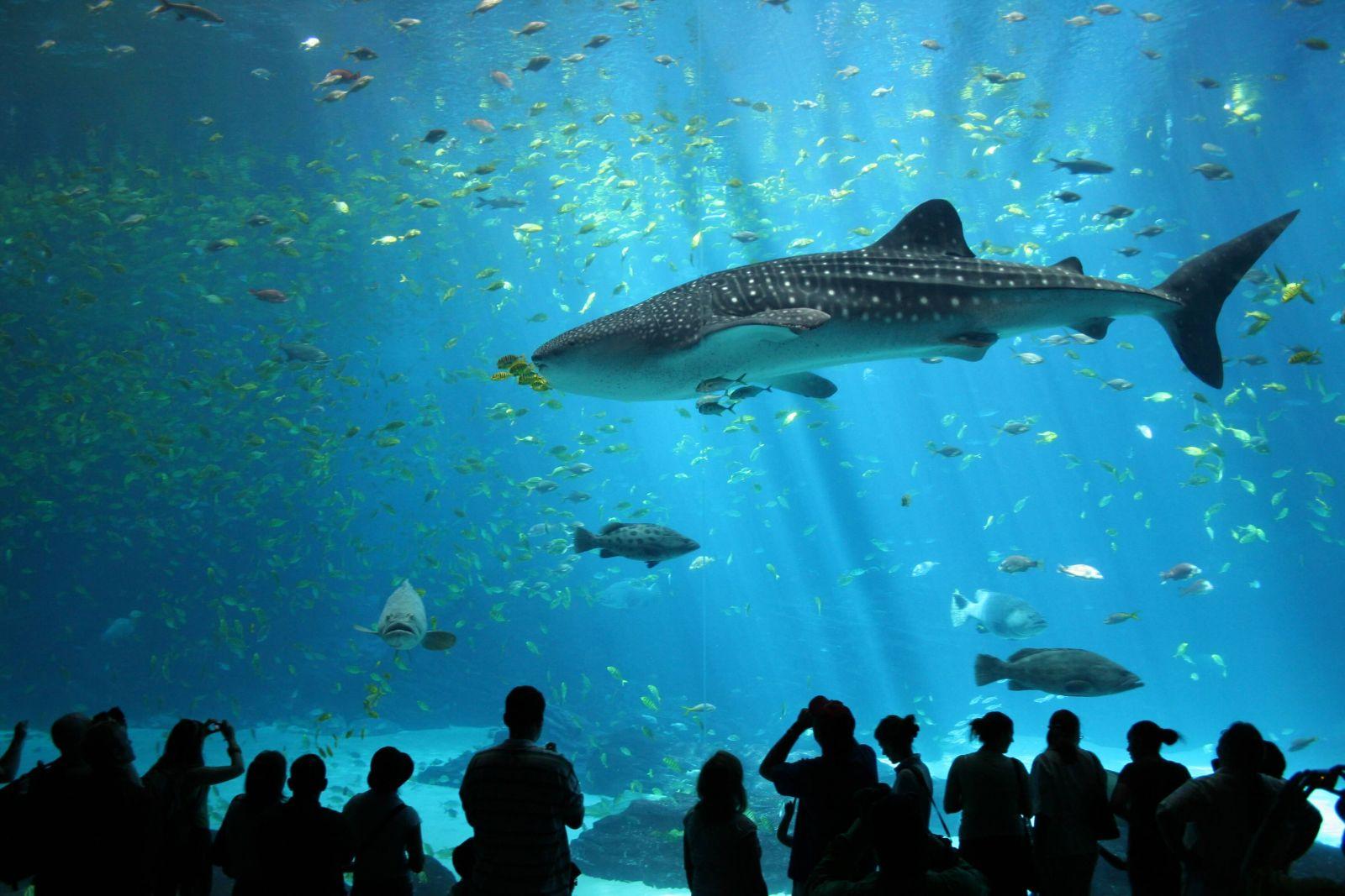 Thủy cung Aquaria KLCC – Thiên đường đại dương giữa Thủ đô Malaysia