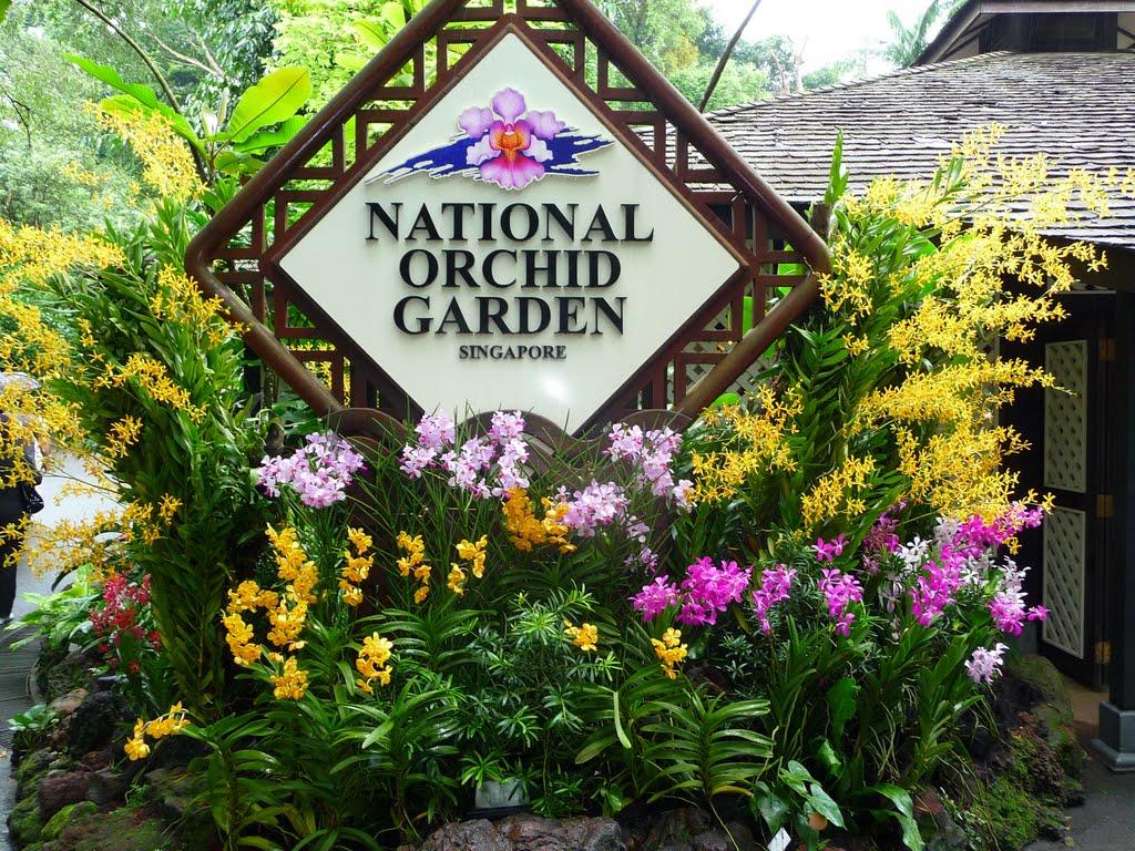 Vườn bách thảo Botanic Garden - Niềm tự hào của người Singapore